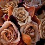 Royal-Romance04